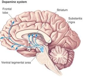 dopamine-system